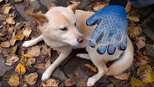 Рукавица True Touch для собак