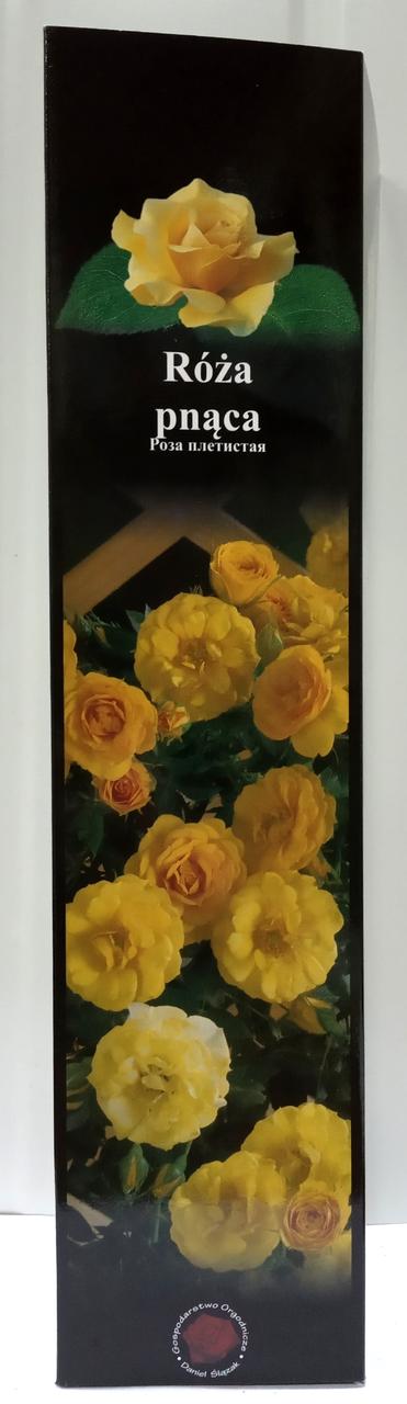 Роза плетистая английская Желтая 16 1шт Польша
