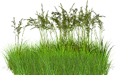 Гербициды (от сорняков)