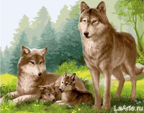 Картина по номерам Волки с волчатами, 40x50 см., Brushme