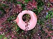 """Лейка """"CANA"""" 1L (цвет розовый) QUUT 170709, фото 5"""