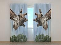 """Фотошторы """"Жираф"""" 250 х 260 см природа фото штори шторы с рисунком"""
