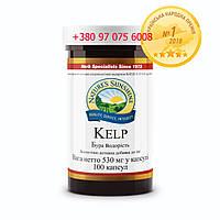 Келп (Kelp)