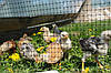 Сетка садовая птичка 12*14 мм ширина 2 метров