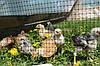 Сітка садова пташка 30*35 мм ширина 1.5 метра