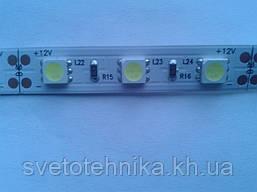Светодиодная лента MagicLed (чип пр-ва Тайвань) 50*50 без сил (60шт/м) синяя