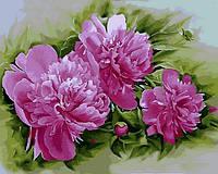 Живопись по номерам Розовые пионы (MR-Q2184) 40 х 50 см Mariposa
