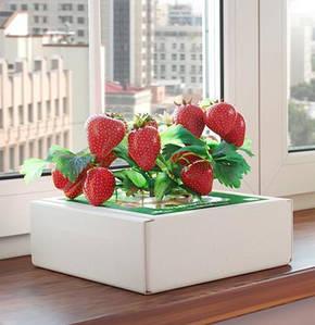 Чудо-ягодница «Сказочный сбор» для выращивания клубники в домашних условиях