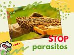 Антипаразитарна терапія [Продукти бджільництва у боротьбі з паразитами]