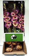 Луковицы гладиолусов Динамит (Dinamite)  (50шт) 1шт, фото 1