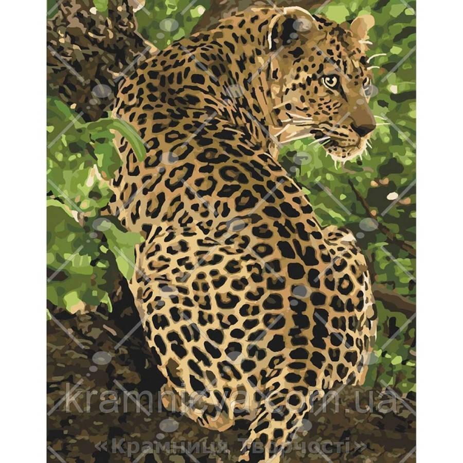 Картина за номерами 40х50 Леопард (КНО4101)