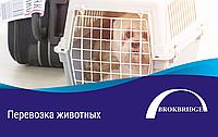 Международная перевозка животных. Авиа (Сертифицированный агент IATA)