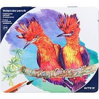 Цветные карандаши KITE Птицы К18-1053 24 цвета Акварель (металл. пенал)