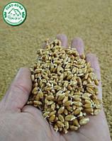 Новое поступление: Пшеничный солод