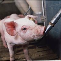 Поилка для свиней! Удобно, практично, просто!
