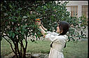 Фотопленка  Fujifilm ETERNA  250D 8563, фото 7