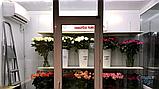 Холодильний Кулбаїн SCold AgK-25TW, фото 5