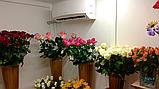 Холодильний Кулбаїн SCold AgK-21TW, фото 4
