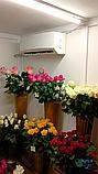 Холодильний Кулбаїн SCold AgK-21TW, фото 6