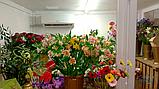 Холодильний Кулбаїн SCold AgK-21TW, фото 5