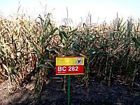 Насіння кукурудзи Бц 282 (Хорватія) БЦ Інститут селекці Загреб
