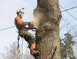 Спил дерева . Обрезка деревьев, фото 4