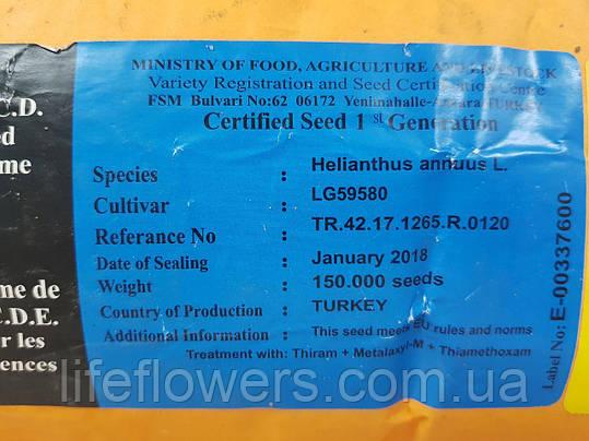 Семена подсолнуха ЛГ 59580  ( LG 59580), фото 2