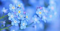 Зі святом Весни, наші найцінніші !