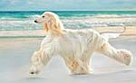 Собачий корм для длинной шерсти