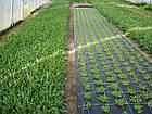 Агроткань НА МЕТРАЖ против сорняков PP, черная UV, 105 гр/м²  1,05м Bradas, фото 2