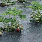 Агроткань НА МЕТРАЖ против сорняков PP, черная UV, 105 гр/м²  1,05м Bradas, фото 4