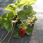 Агроткань НА МЕТРАЖ против сорняков PP, черная UV, 105 гр/м²  1,05м Bradas, фото 5