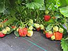 Агроткань НА МЕТРАЖ против сорняков PP, черная UV, 105 гр/м²  1,05м Bradas, фото 6