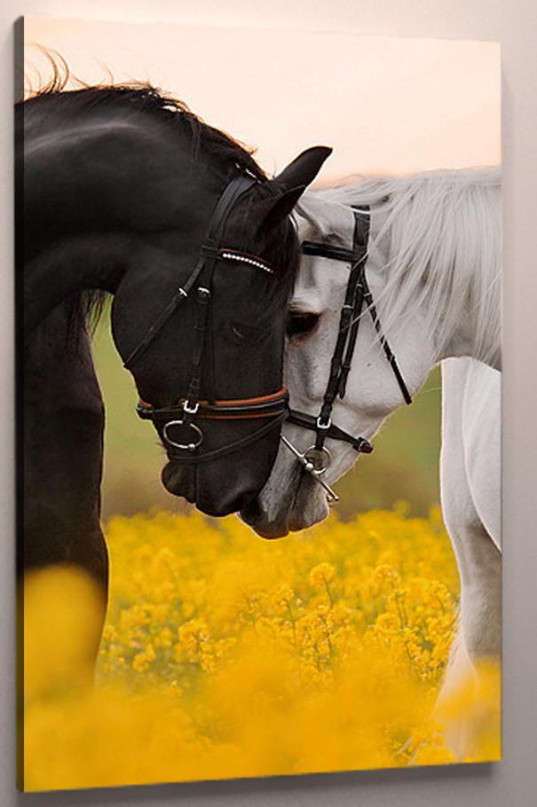 Картина на холсте Лошади 60х40