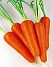 Семена моркови Абако F1 (Abaco F1) (фракция 2,2-2,4) 1 000 000 семян Seminis (Голландия)