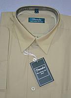 БЕЖЕВА сорочка з коротким рукавом 100% бавовна (розміри 39.40.41.42.43.45)