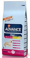 Корм для пожилых собак крупных пород Advance Dog Maxi Senior