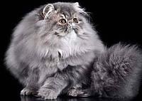 Кошачий корм для длинной шерсти