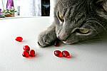 Кошачьи витамины для длинной шерсти