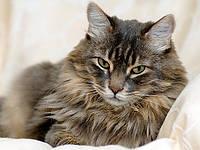 Корм для кошек для выведения шерсти