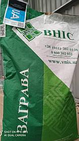 Семена подсолнечника/подсолнуха Заграва (100-108), устойчив к заризихе (А-Е)