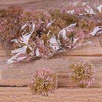 Головка чеснок розовый