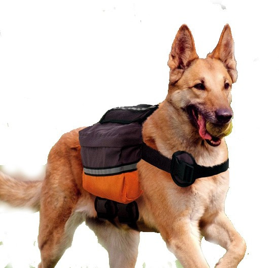 Рюкзаки для собак на спину