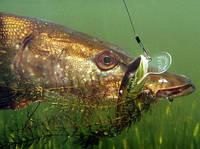 Поводок щучий (КАIDA) 30 см., фото 1