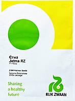 Капуста ЭТМА F1 | JETMA Rijk zwaan 2500 шт (поліпшені насіння)