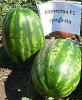 Семена арбуза Каристан F1/ Karistan (Syngenta) 1000 семян — (70-75 дня), овальный, вес 9-12 кг