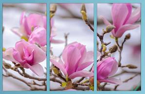 Модульная картина 90х60, цветы магнолии, холст