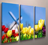 Модульная картина тюльпаны Голландия 90х60