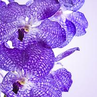 Косметические отдушки для мыла, свечей, косметики ручной работы VANDA ORCHID, ваниль 0%