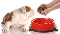 Что такое корм премиум класса для собак. Классификация.